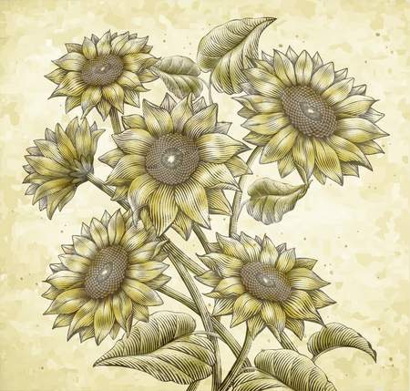 Retro Sunflower vector illustration