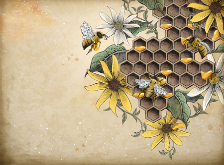 Honey bee and apiary, retro hand drawn etching shading style design vector illustration