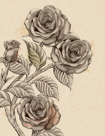Retro roses decorative vector illustration