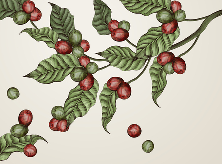 Illustration of leaves and coffee cherries in red and green Illustration