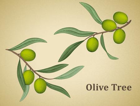 Affiche d & # 39 ; olivier avec des olives et des feuilles éléments Banque d'images - 98400466