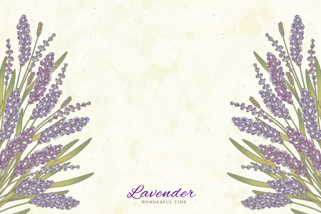 Engraved lavender flowers on beige background with copy space