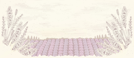 Engraved lavender garden background with copy space Illustration