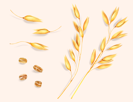 Wheat ear and grain elements Ilustração