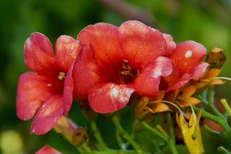 Beautiful small flowers in the sensational colors. The nature is magnificent - Front view Stock Photo