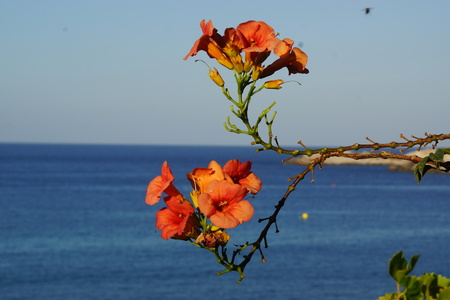 A flower, sea and mountain in Crete Stock Photo