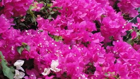 Flower Explosions Reklamní fotografie