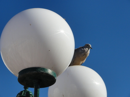 a bird on a lamppost