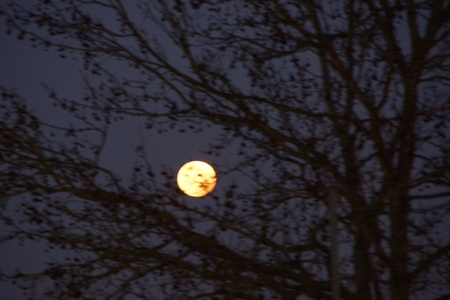 The moon is grinds and brilliant. The sky is dark, and in front of the moon there are trees. The branches are without sheets. There is no character.