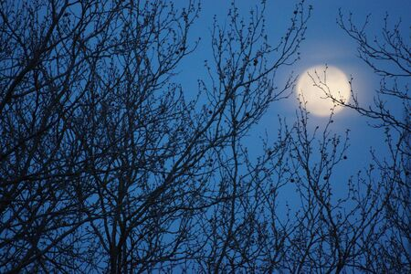 Supermoon pink full moon 8 April 2020 in France. It occurs when the full moon is at its closest point to the Earth in its monthly orbit. Full moon. A huge moon.