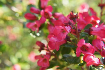 Magnificent petals of pink color. Beautiful small flowers in the sensational colors. The nature is magnificent. Beautiful small flowers which represent the beauty of the nature. Grip Taking of view sight outside with the natural light, without character.