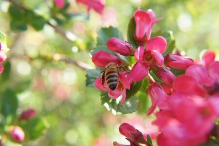 Magnificent petals of pink color. Beautiful small flowers in the sensational colors. Beautiful little flowers with sensational colors with a bee that is foraging.