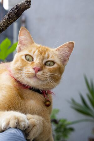 Adorable ginger cat with big eyes lying on concrete wall. Pet portrait - image