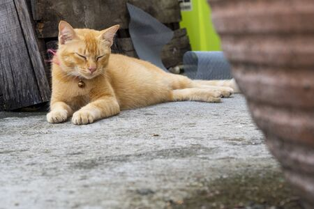Relaxed ginger cat lying on concrete floor. Cat is taking a nap after eating. Pet portrait - Image