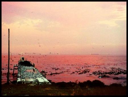 robben island: Sunset Robben Island Cape Town