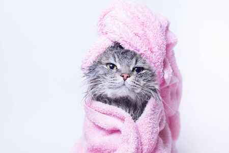 Funny smiling wet gray tabby cute kitten after bath wrapped in pink towel. Pets and lifestyle concept. Head on gray background.
