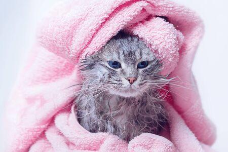 Concepto de estilo de vida y mascotas divertidas sonrientes pelo gris atigrado mojado. Cabeza sobre fondo gris.