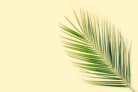 Tropical leaf on yellow background. Flat lay, top view Reklamní fotografie