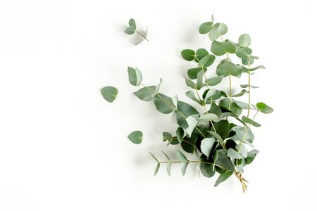 Eucalyptus bouquet on a white background. Flat lay, top view.