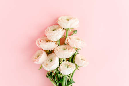 Pastel pink ranunculus flowers bouquet on pink background. Minimal floral concept. Flat lay, top view.