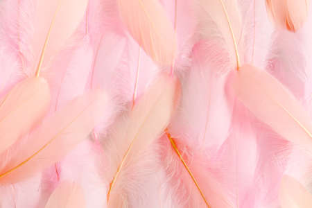 Pink feathers textured background. Feather background. Flat lay, top view Imagens