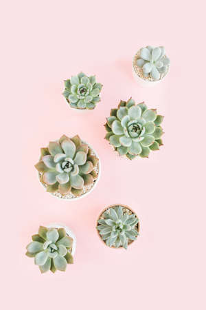 Beautiful pattern of green succulents isolated on pink background. Flat lay, top view. Фото со стока
