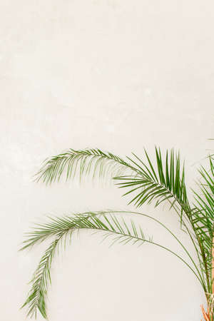 Tropical palm in home in flowerpot on white background. Modern minimalistic interior with an home plant. Flat lay, top view minimal concept. Stock fotó - 155447245
