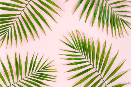 Texture tropical green palm leaves on pink background. Flat lay, top view