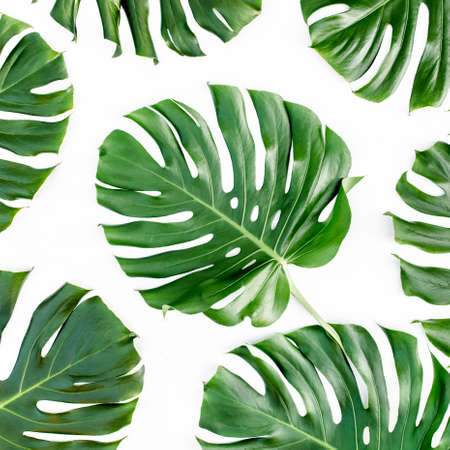 Tropical leaves Monstera on white background. Flat lay, top view Foto de archivo