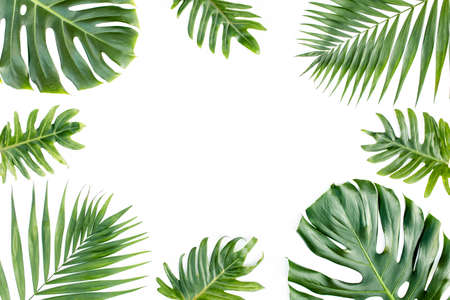 Frame with exotic tropical palm leaves monstera on white background. Flat lay, top view.
