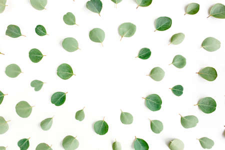 Round frame workspace with green leaves eucalyptus populus isolated on white background. lay flat, top view