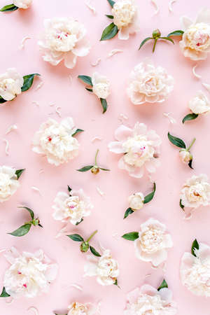 Pattern of pink and beige peony flowers on pink background. Peony texture. Flat lay, top view.