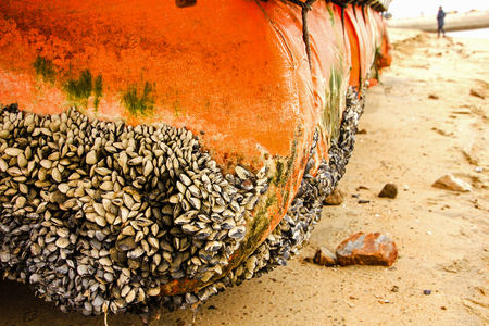 Buoys and mussel in Beach, South korea