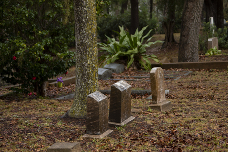 Old weathered upright tombstones dead leaves but green foliage
