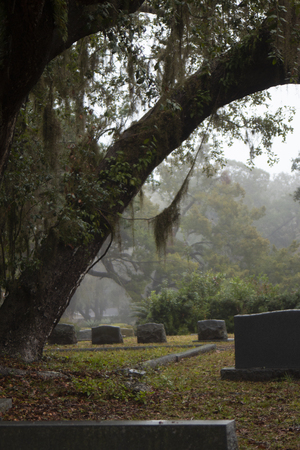 Upright tombstones in misty cemetery with tree and spanish moss
