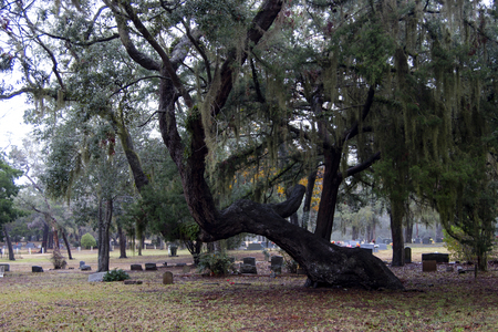 cemetery with huge old tree with spanish moss and mixed tombstones Banco de Imagens
