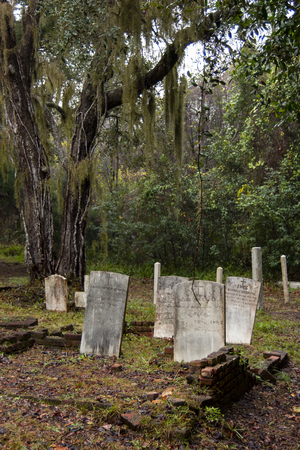 Standing headstones in cemetery under tree with spanish moss