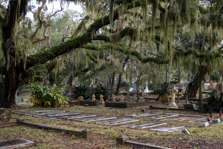 Many types of tombstones and a killer tree with spanish moss