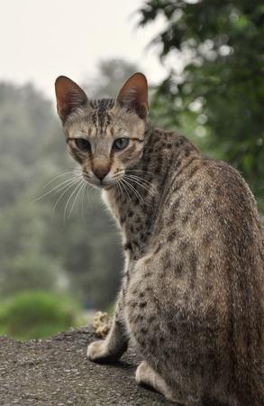 feral: Feral Cat