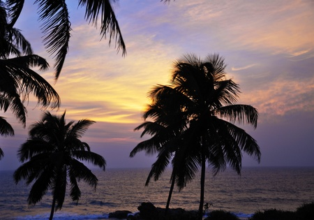 The silhouettes of palm trees on a beautiful evening in Sri Lanka photo