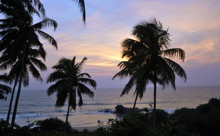 Palm trees at the beach at a beautiful sunset in Sri Lanka photo