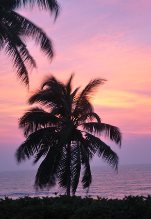 The silhouette of a palm tree on a windy evening in Sri Lanka photo