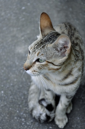 reflexive: A Cat s Life Stock Photo