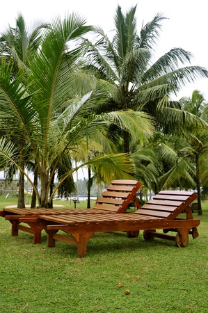 sunbeds: Two sunbeds in a lawn surrounded by palm trees at a resort on the coast, Sri Lanka Stock Photo