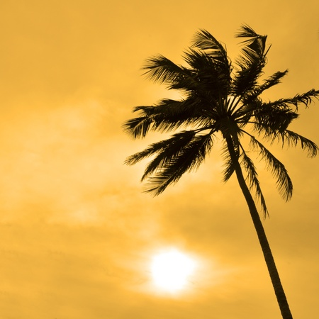 The Silhouette of a Palm tree against the sun on a windy day photo