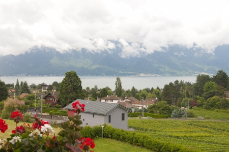 Houses and geraniums amidst vineyards by Lake Geneva in Vevey, Switzerland photo