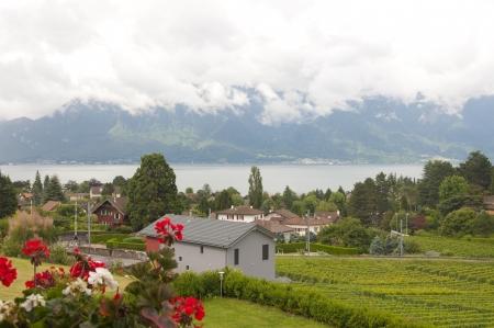 vevey: Houses and geraniums amidst vineyards by Lake Geneva in Vevey, Switzerland Stock Photo