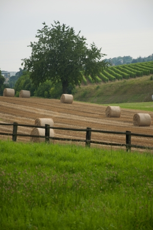 Bales of hay in a field in Switzerland photo
