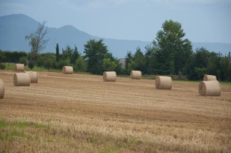 vevey: Bales of hay in a field in Switzerland