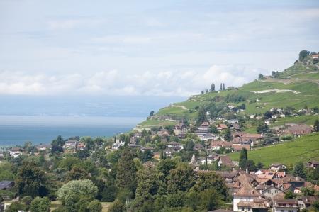 vevey: Houses amidst vineyards in Vevey, Switzerland